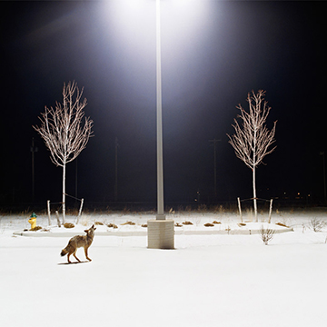 Amy Stein, Howl, 2007, Digital chromogenic print