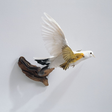 Carlee Fernandez, White Pigeon with Saffron Finch, 2004, Altered taxidermy and branch